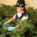 How to Stop Your Properties from Becoming a Cannabis Farm